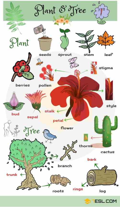 small resolution of list of plant and flower names