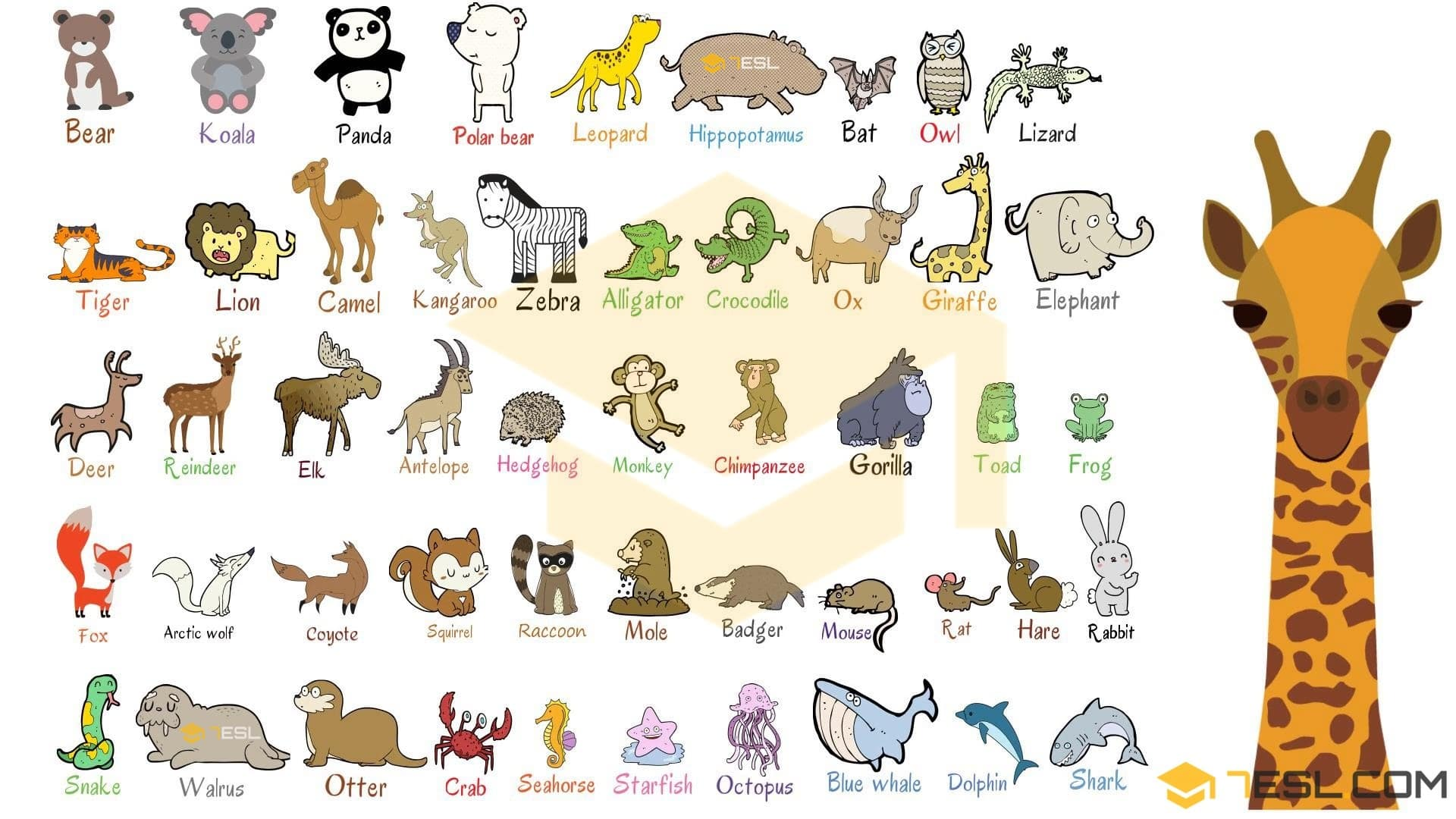 Wild Animals List Of Wild Animal Names With Images