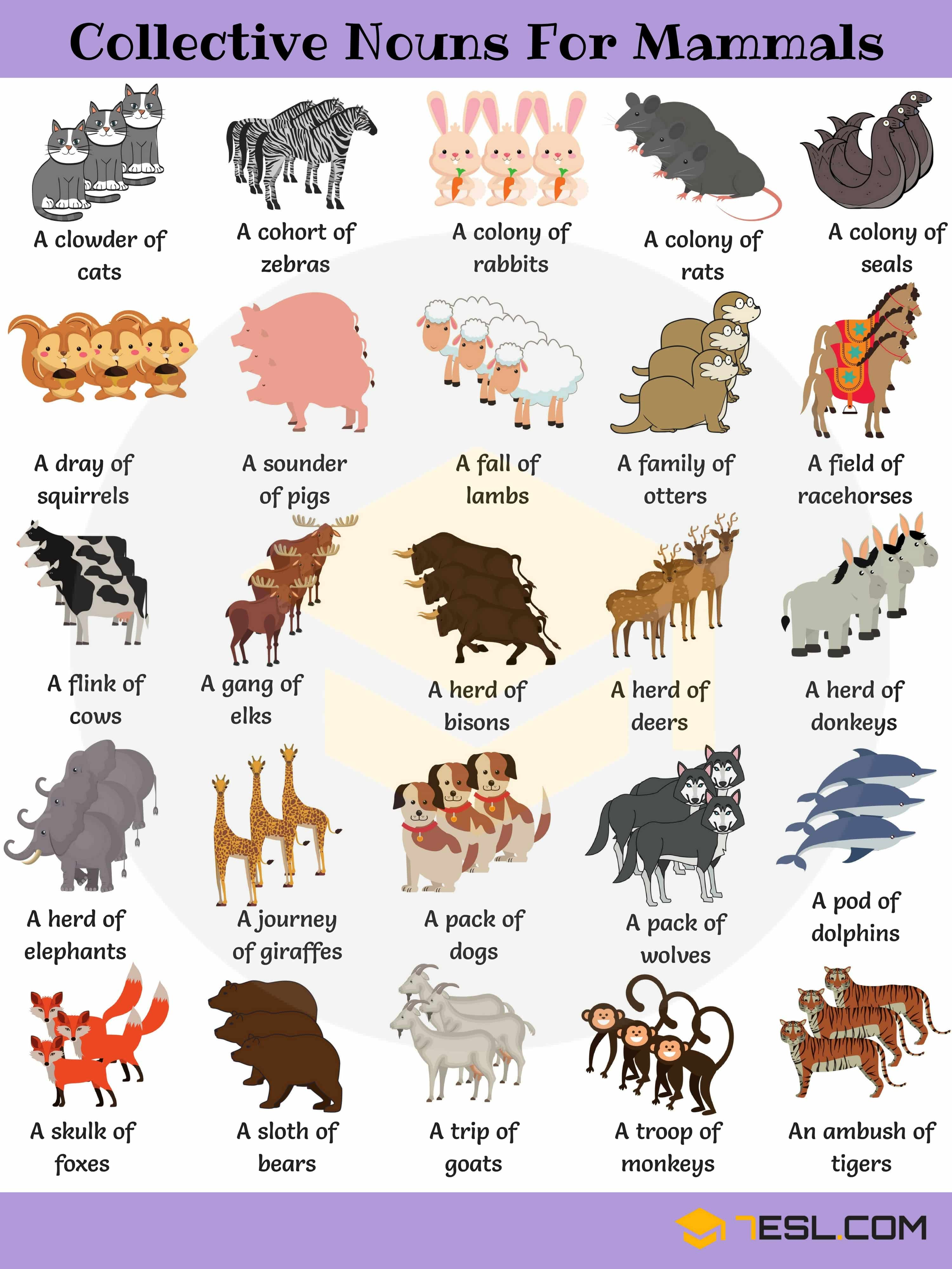 Animal Group Names 250 Collective Nouns For Animals