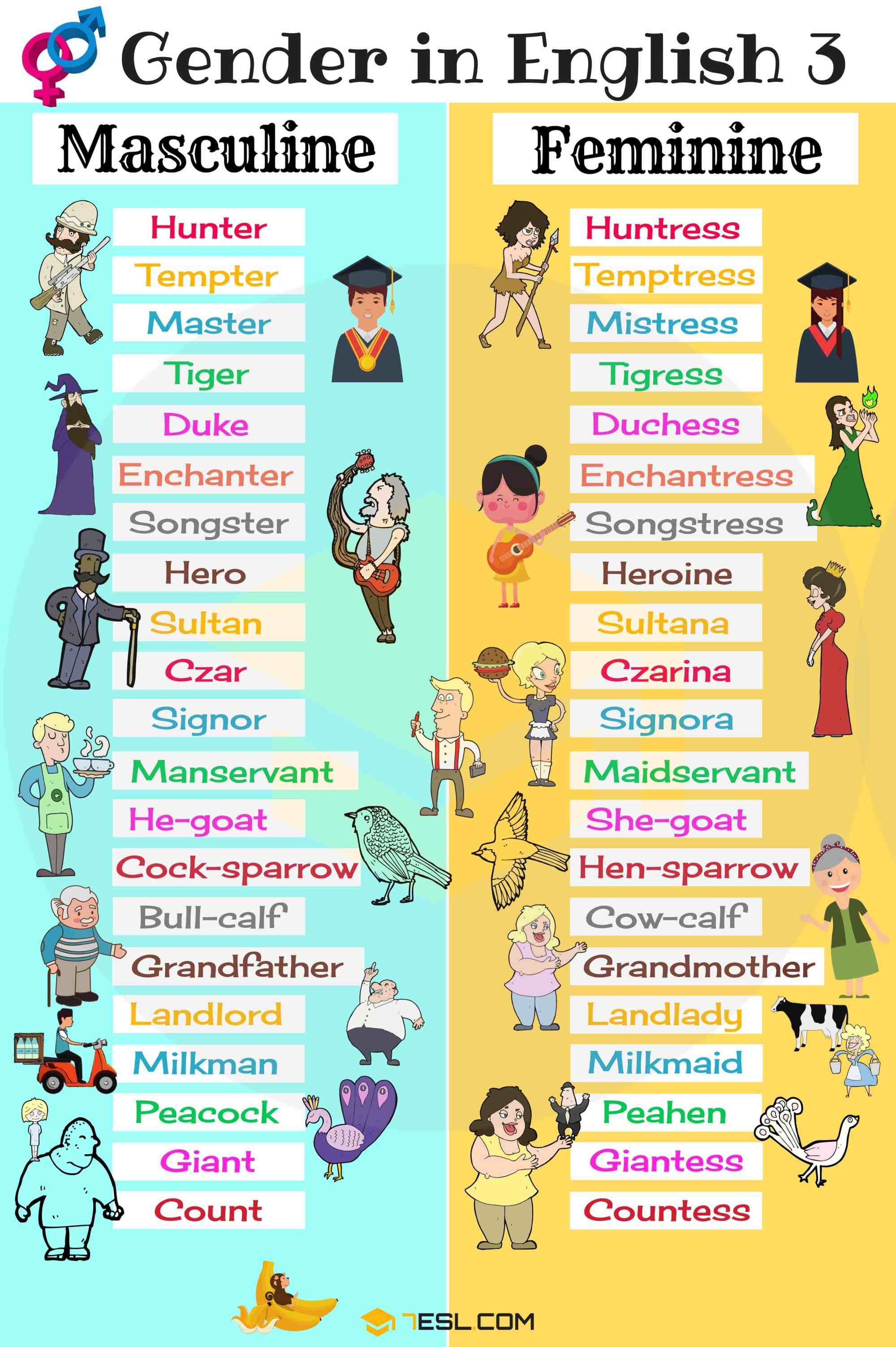 hight resolution of Gender of Nouns: Useful Masculine and Feminine List • 7ESL