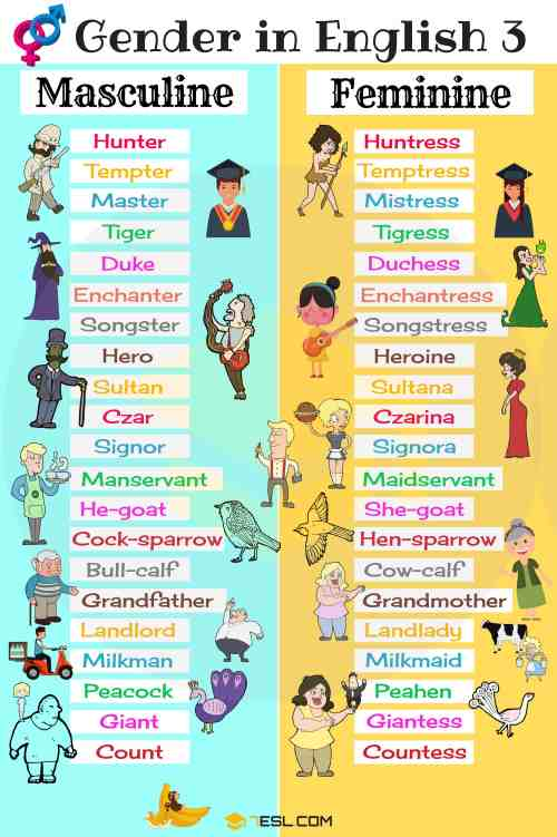 small resolution of Gender of Nouns: Useful Masculine and Feminine List • 7ESL