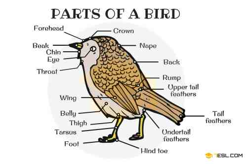 small resolution of different parts of a bird in english bird anatomy