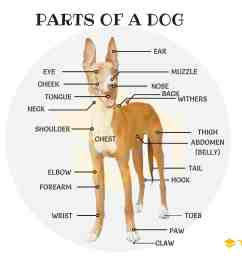 parts of a dog useful dog anatomy with pictures [ 4000 x 3000 Pixel ]