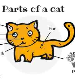 different cat parts useful cat anatomy with pictures [ 3000 x 2000 Pixel ]