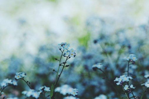 throat chakra flower.jpg