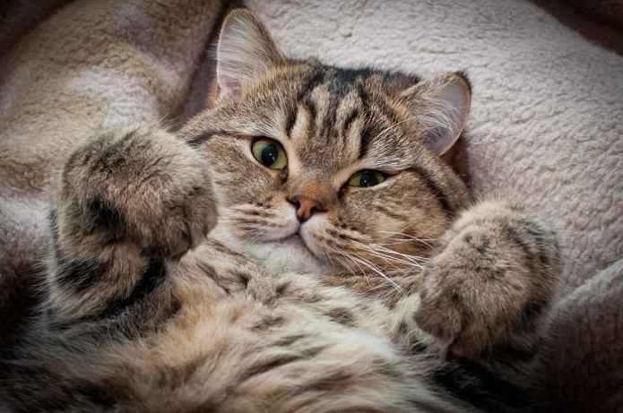 Живодер приманивает кошек кормом и сворачивает им шеи в Подмосковье
