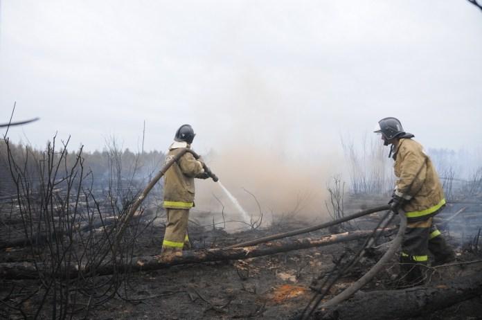 Лесной пожар потушили под Рязанью