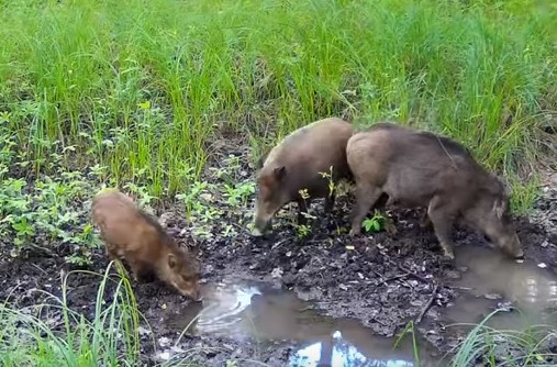 Окский заповедник опубликовал новогодний ролик со зверями, попавшими на фотоловушки