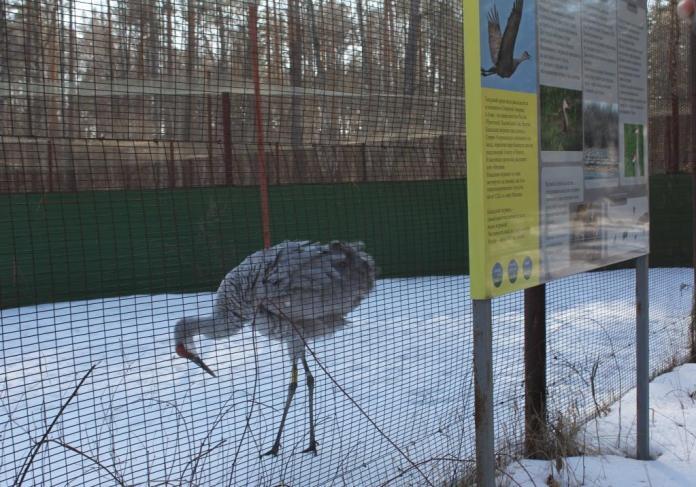 В Окском заповеднике благодаря РНПК появится система водообеспечения питомников редких животных и птиц