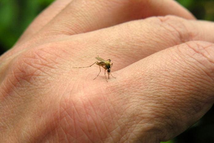 Эксперты пояснили, ухудшат ли летающие насекомые ситуацию с COVID-19