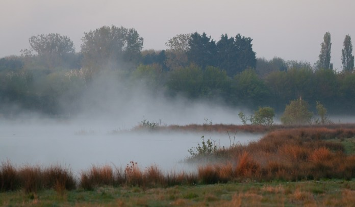 МЧС предупредило рязанцев о сильном тумане