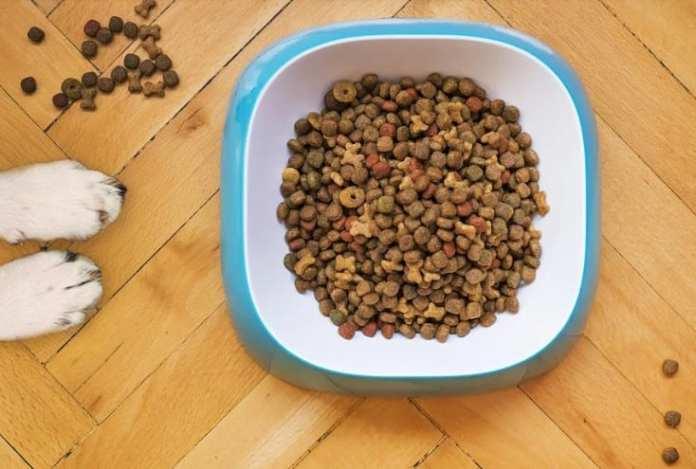 Как поменять корм собаке без вреда для её здоровья