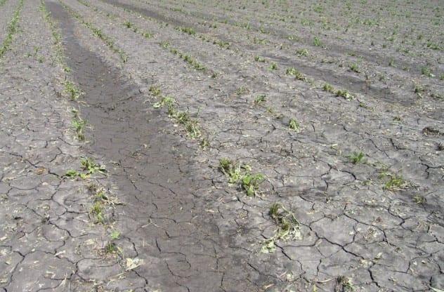После града и ливня в Рязанской области пострадали посевы