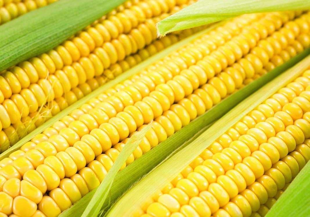 соцсети кукурузы почему выкладывают