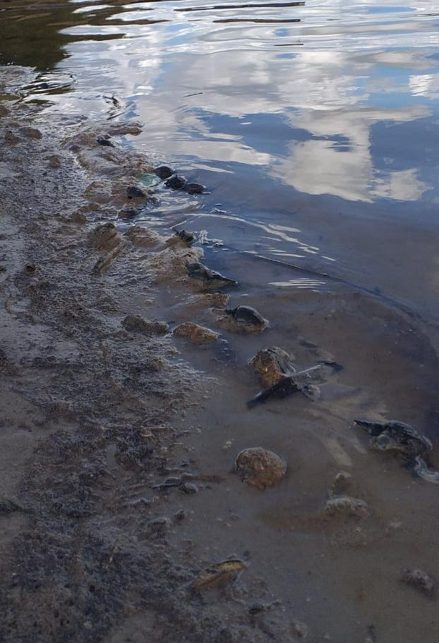 В Солотче загрязняют реку фекалиями
