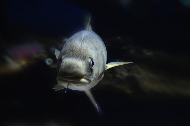 В Липецкой области 40% рыбы заражено паразитами