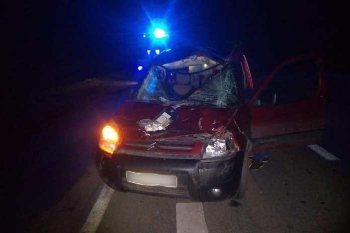 Под Рязанью автомобиль сбил лося, пострадала пассажирка