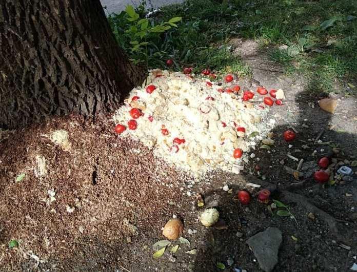 У школы в Рязани сфотографировали гору выброшенной еды