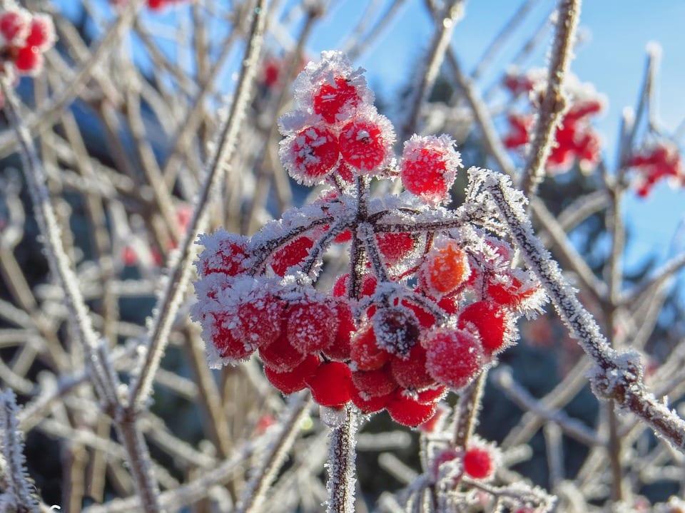 В Рязанской области похолодает до -19 градусов