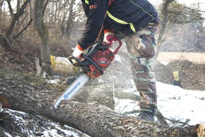 В деревне Савино Новгородской области снесли дубы для лучшего освещения