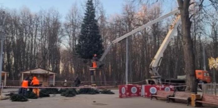 В Рязани установили первую новогоднюю ёлку