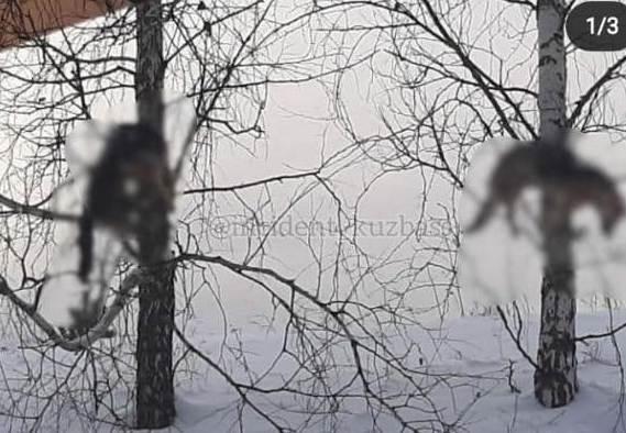 В Кемеровской области живодеры убили собак и развеслии трупы по деревьям