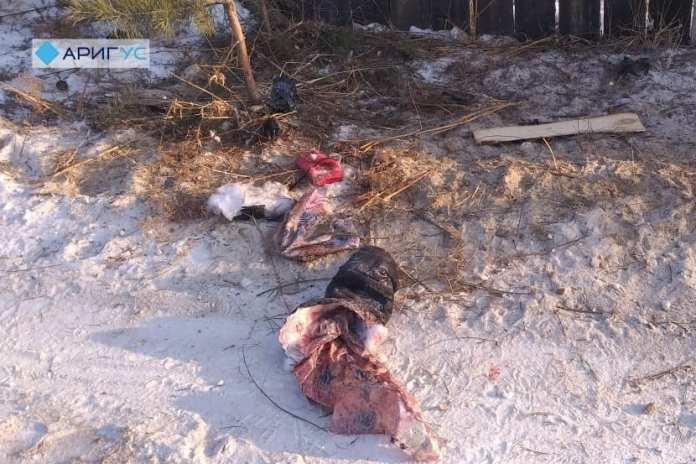 В Бурятии стая собак загрызла 20-летнюю девушку и напала на маленького мальчика