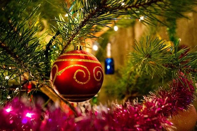 Эксперты Роскачества дали советы по выбору живой ёлки на Новый год