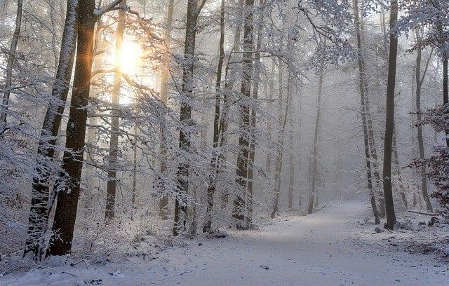 В ночь на 8 марта в Рязани ожидается до -10 градусов