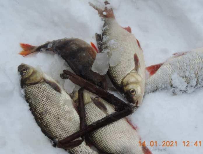 На реке Усмань Липецкой области специалисты обнаружили замор рыбы