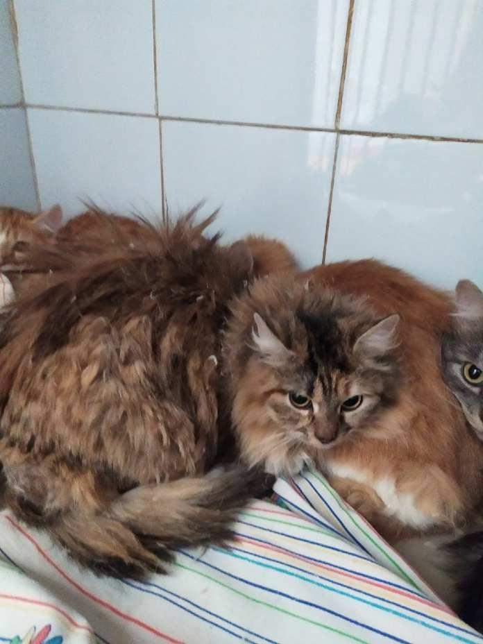 Из квартиры рязанской пенсионерки вывезли 17 кошек, которых специалисты ловили три часа