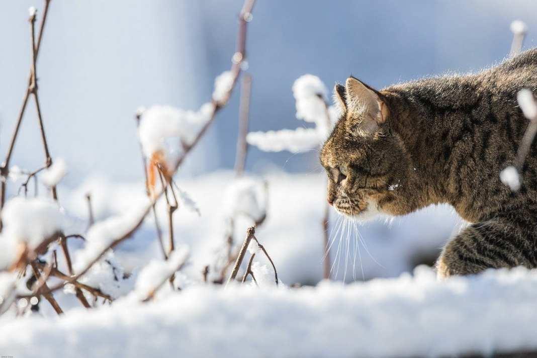В ночь на 2 февраля в Рязанской области ожидается мороз до -14 градусов