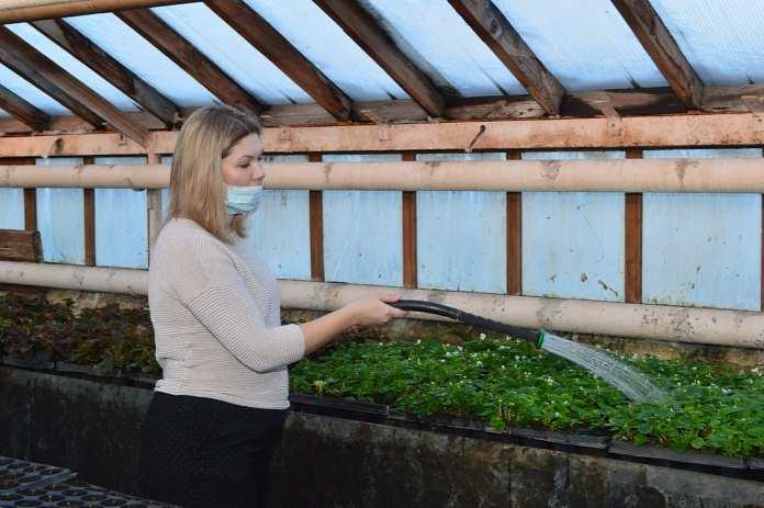 Елена Сорокина осмотрела тепличное хозяйство в Рыбновском районе