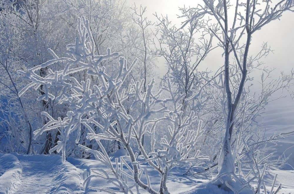 В Рязанской области похолодает до -29 градусов