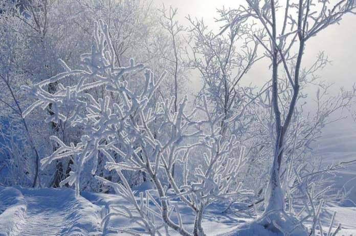 Из-за снегопада водителей Новгородской области просили быть осторожными