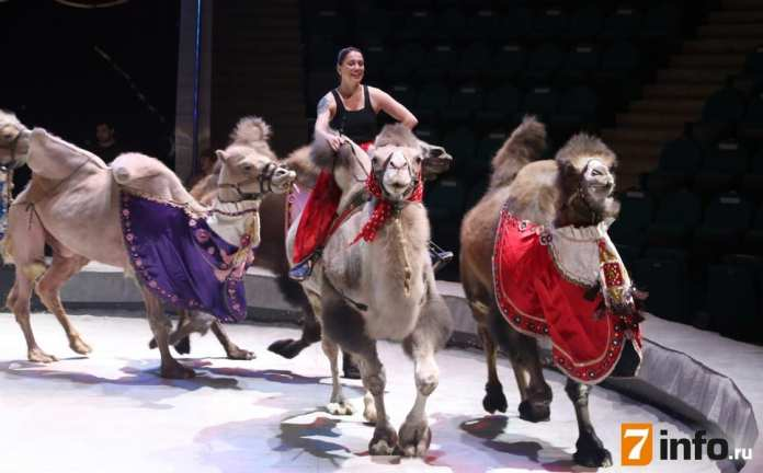 В рязанском цирке прошёл генеральный прогон программы «Цирк зажигает огни»