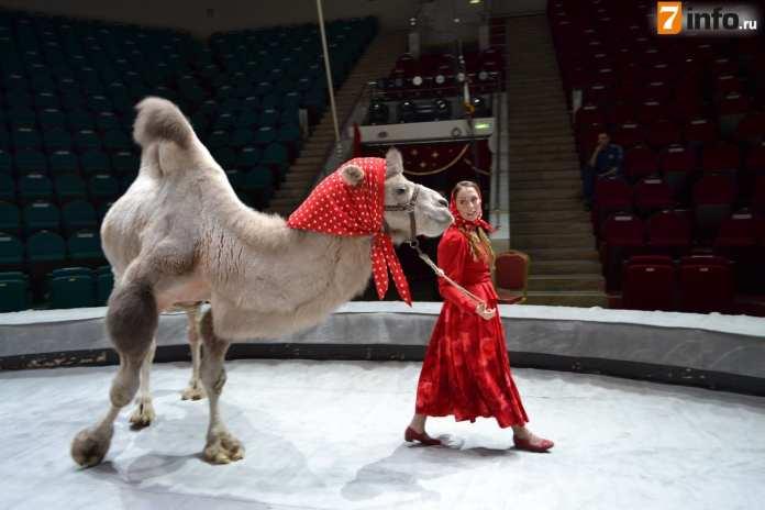 Спустя год рязанский цирк снова открывает свои двери громкой премьерой