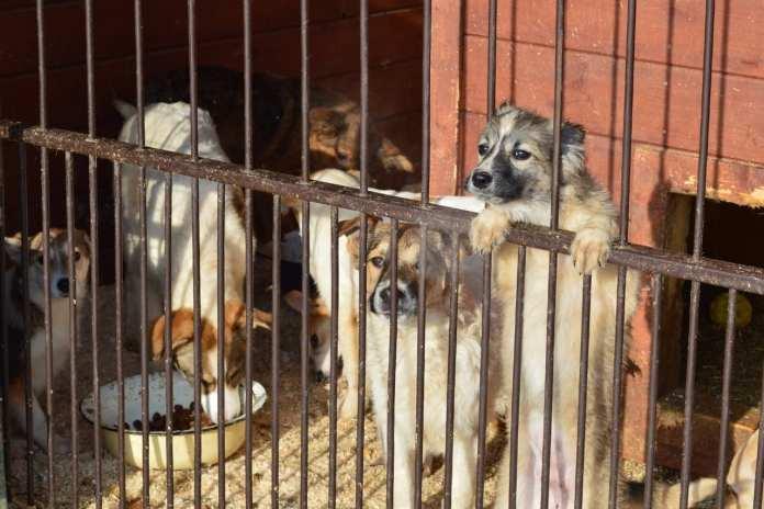 В рязанском Храпове планируют построить новый приют для бездомных животных