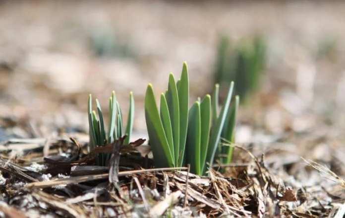 Какие работы проводят в саду и в огороде в апреле