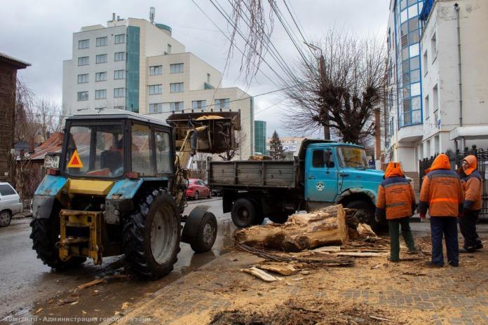 В Рязани валят аварийные деревья