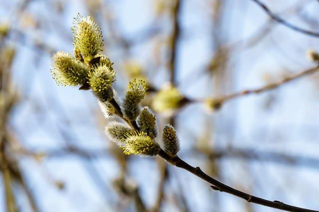 Народные приметы 13 апреля: что нельзя и что можно делать в день Ипатия Чудотворца
