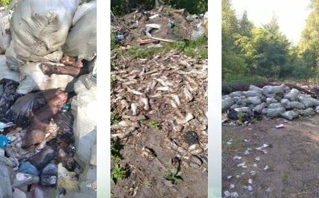 В двух местах под Рязанью обнаружили гниющие останки скота