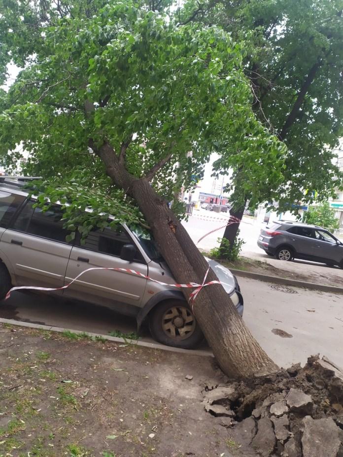 Дерево упало на автомобиль в центре Рязани