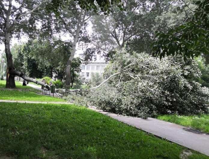 В центре Рязани дерево упало на тротуар