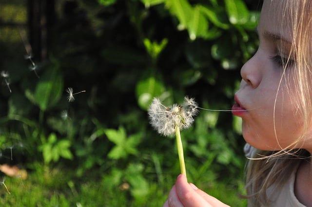 Народные приметы 17 июня: что нельзя и что можно делать на Лукьяна Ветряка