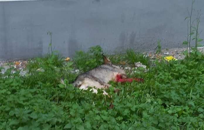 У детского сада в Рязани мужчина пытался зарезать собаку