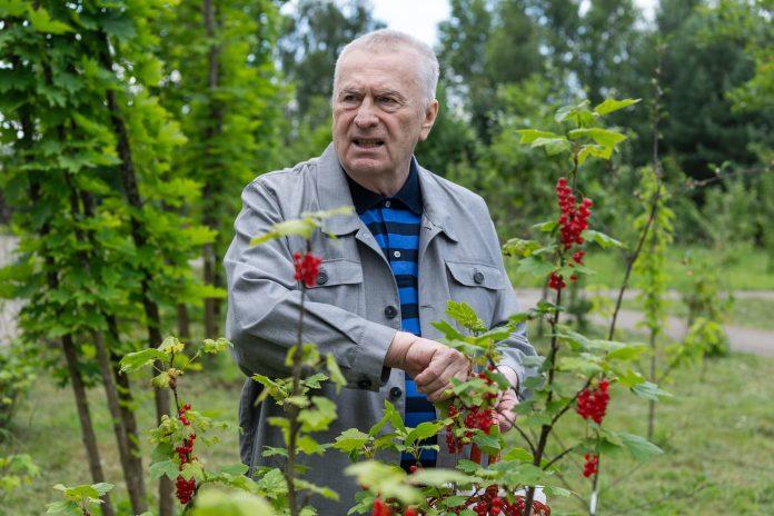 Жириновский назвал депутата от Архангельской области Ирину Чиркову воровкой