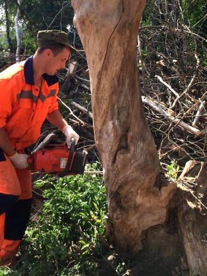 В Рязани проводят валку аварийных деревьев
