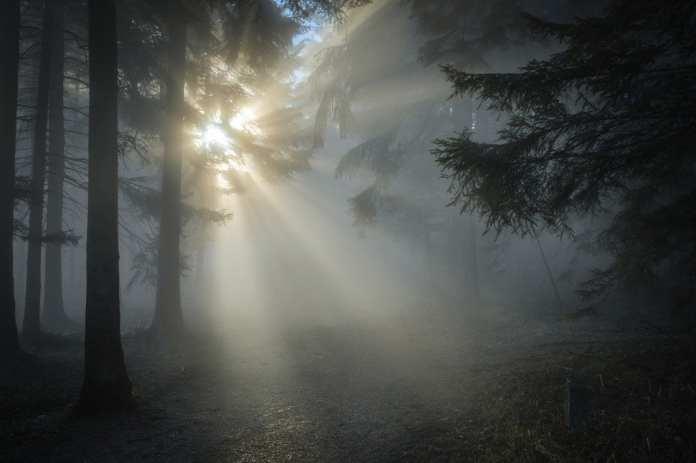 В Рязанской области объявили метеопредупреждение из-за тумана