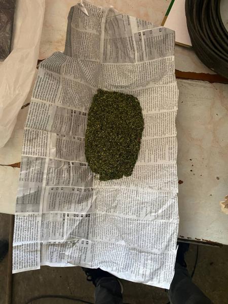 Житель Касимова выращивал на огороде марихуану